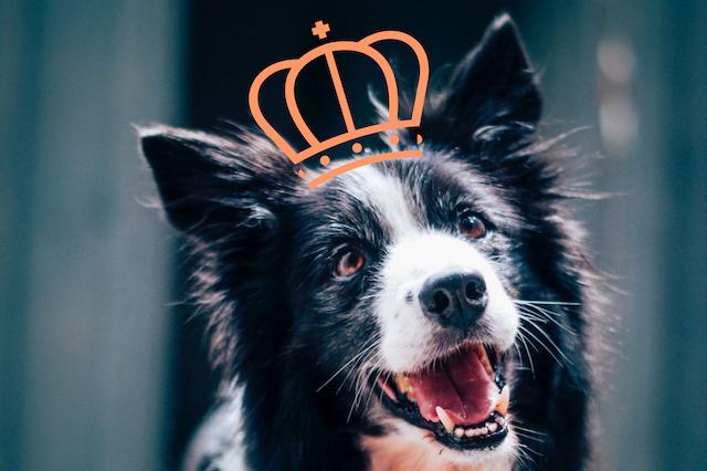 hond met kroon koninklijke wandeling