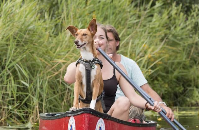 dogwalktrail kano met hond voor op