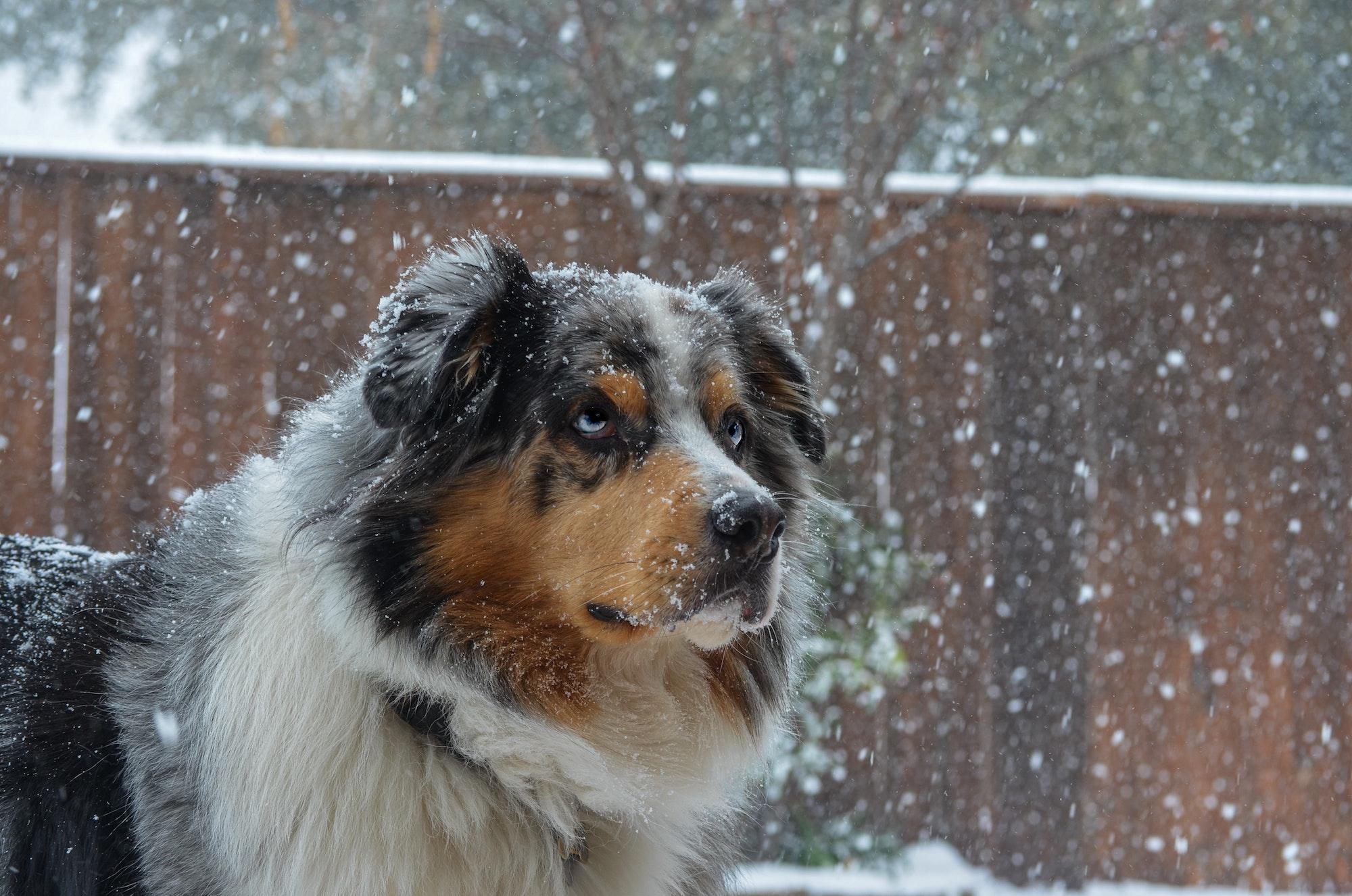 DWT-hond in sneeuw
